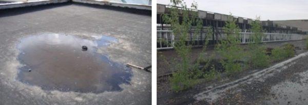 Во впадинах на кровле скапливается вода, пыль и грязь, что способствует появлению растительности и разрушению покрытия