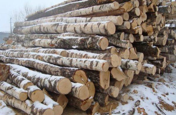 Пилить деревья лучше всего зимой